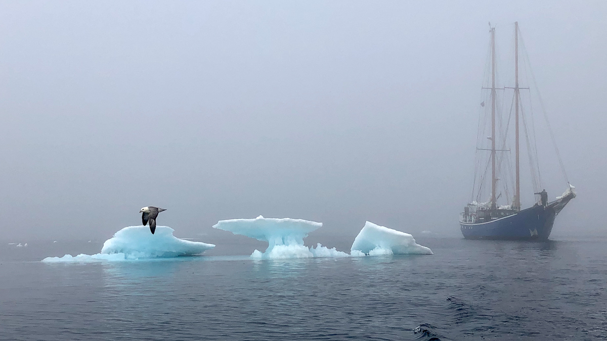 arctic expedition Mauritius in the mist