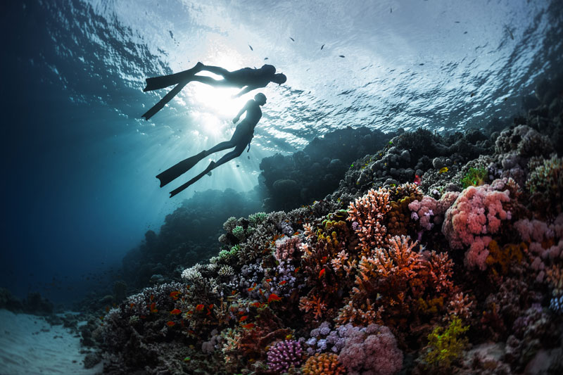 plongeurs mer-Rouge