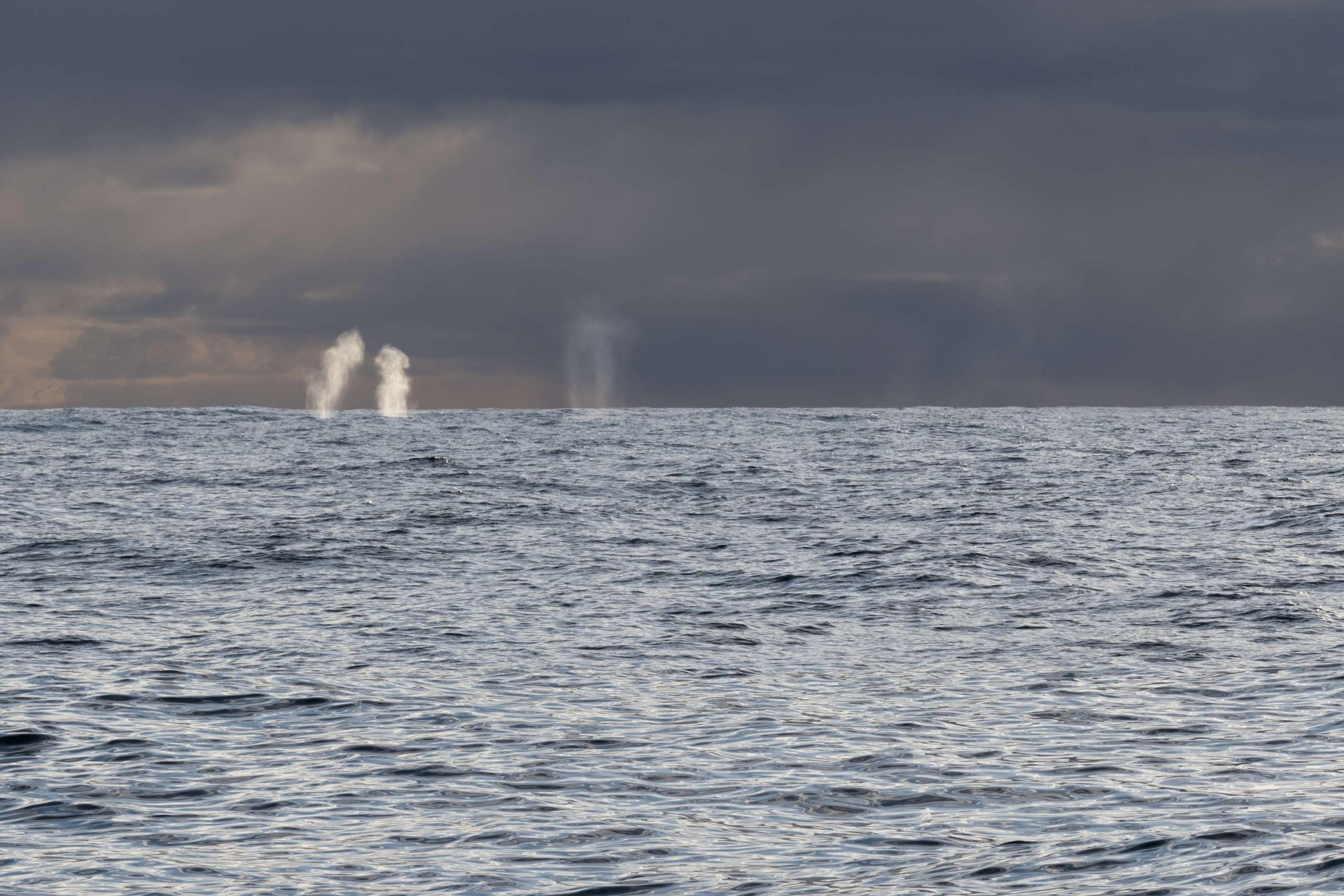 Souffles de baleines au loin fondation pacifique